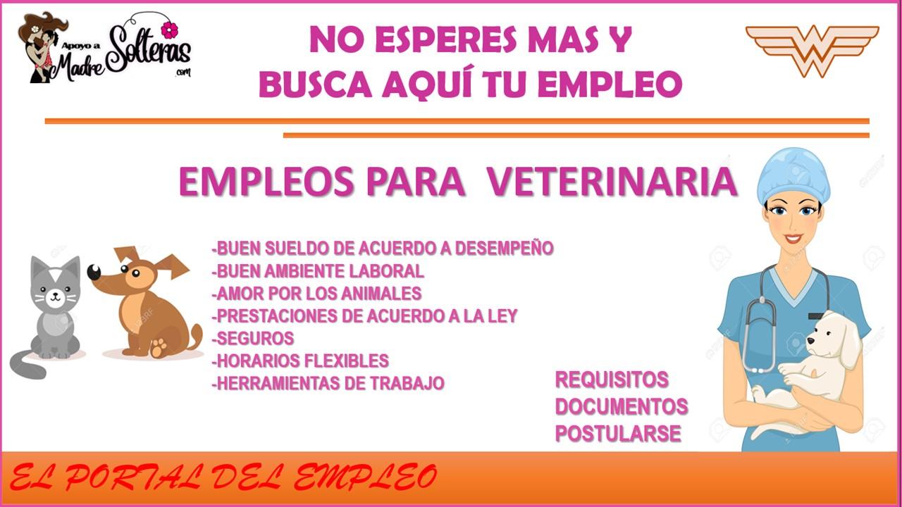 empleos-para-veterinaria